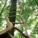 L'échelle relative, 2007. Bois de Chêne, 750 x 120 x 38 cm. 5ème Symposium en milieu naturel à Silly (Be).