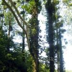 """Echelle relative n°5.(Bois de Chêne, peinture / Lxlxh : 14x1,5x4m)Installation in situ réalisée et exposée à l'occasion de l'évènement """"L'Art est dans les bois n°5"""" (2017) à Pleslin Trigavou."""